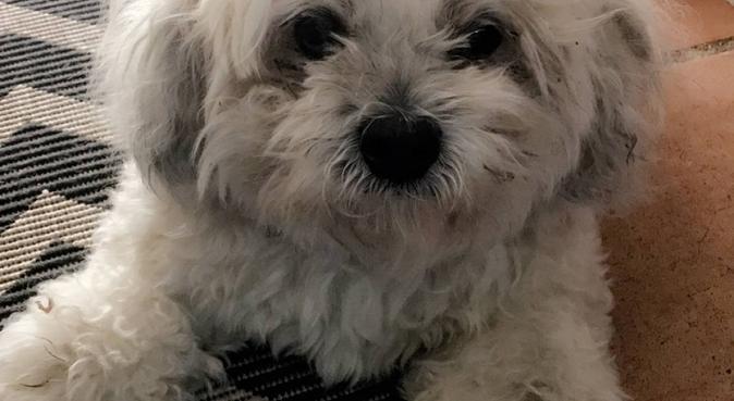 Promenade heureuse, dog sitter à Bouc-Bel-Air