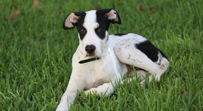 Dedizione, coccole e sicurezza garantiti., dog sitter a Catania, CT, Italia