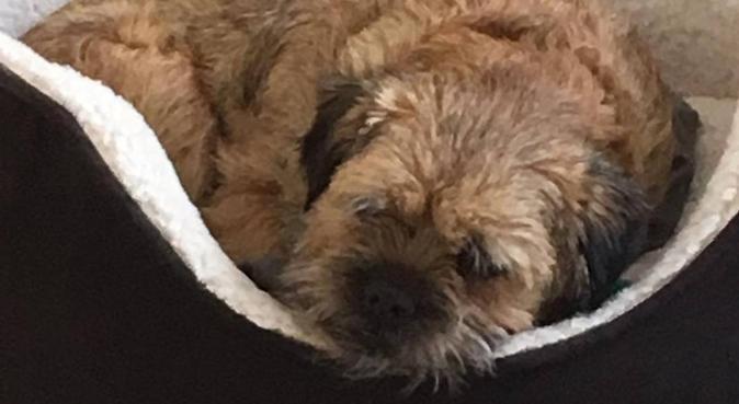 Granny Day Care, dog sitter in York, UK