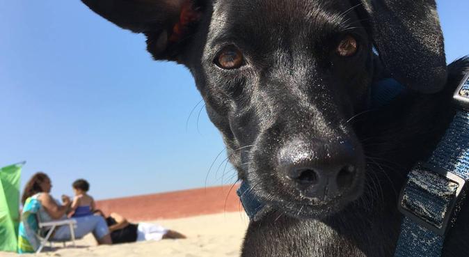 Amoureuse des animaux propose de garder le votre, dog sitter à Wattignies