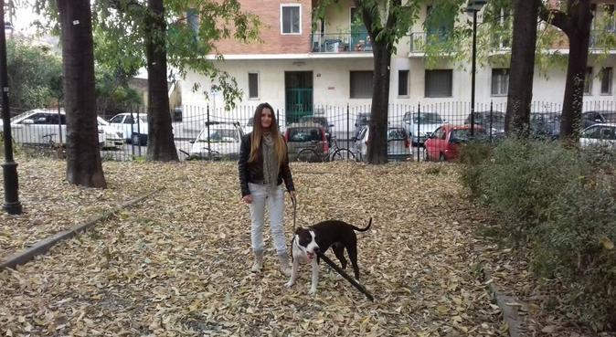 Tante attentenzioni per i nostri amici a 4 zampe, dog sitter a Torino