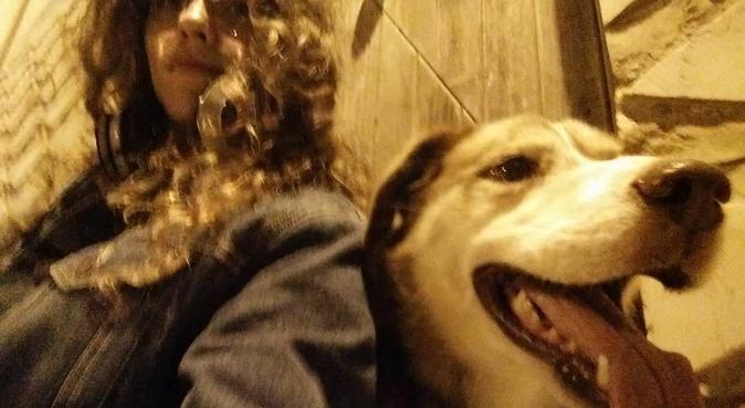 Cerco compagno peloso per giochi e compagnia, dog sitter a Bologna, BO, Italia