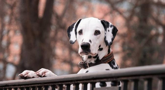 HAPPY DOGS 71, dog sitter à Chalon-sur-saône