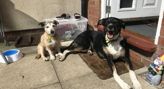 Paw Pals - doggie adventures and lots of love, dog sitter in York, UK