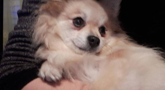 Un moment de complicité et de détente, dog sitter à Villaz
