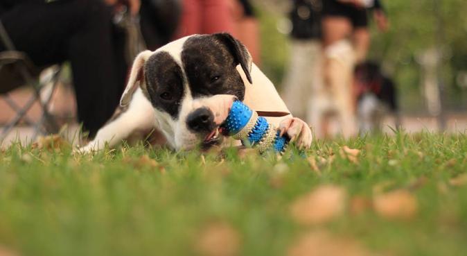 Papouilles et friandises, dog sitter à Montpellier, France