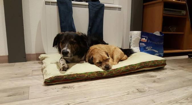 Personne sérieuse pour s'occuper de vos chiens, dog sitter à Strasbourg