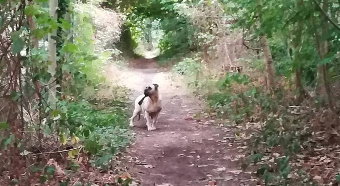 Confort, nature et affection garantis !, dog sitter à Meudon, France