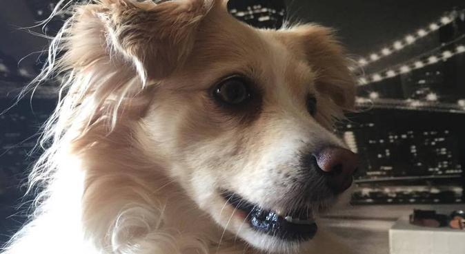L'ami des animaux !, dog sitter à Dijon