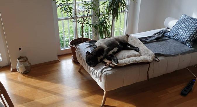 Liebevolles Hundezuhause in Wannsee, Hundesitter in Berlin