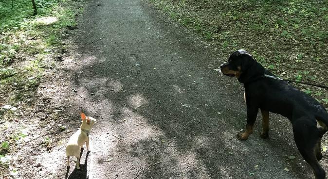 Ein Herz für Hunde ❤️, Hundesitter in Backnang