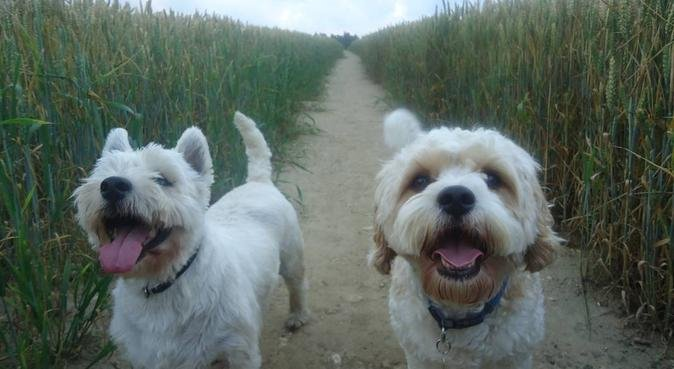 Dogs, dogs and more dogs!, dog sitter in Oxford, UK