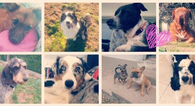 Au bonheur des toutous !, dog sitter à Saint-avertin