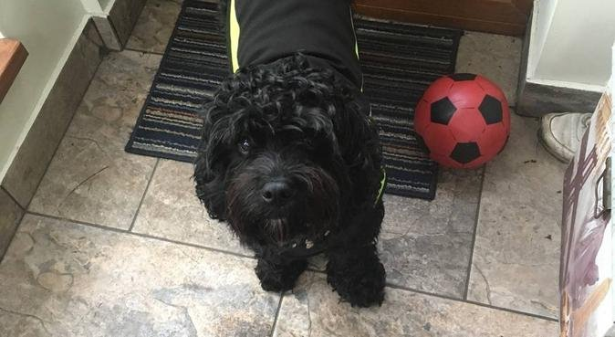 Professional Pet Services, dog sitter in Newport, UK