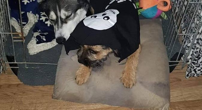 Dog socialising and cuddling in Glasgow, dog sitter in Rutherglen