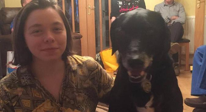 Experienced dog walker :), dog sitter in GLASGOW