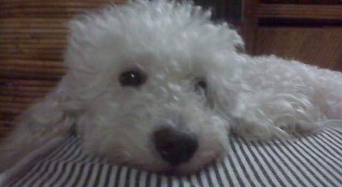 Chica paseadora con alma canina, canguro en Vigo
