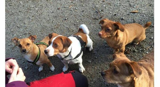 Kärleksfullt och tryggt hundhem i Malmö, hundvakt nära Malmö