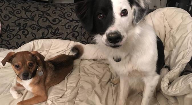 Garde de chiens Pessac Centre, dog sitter à Pessac