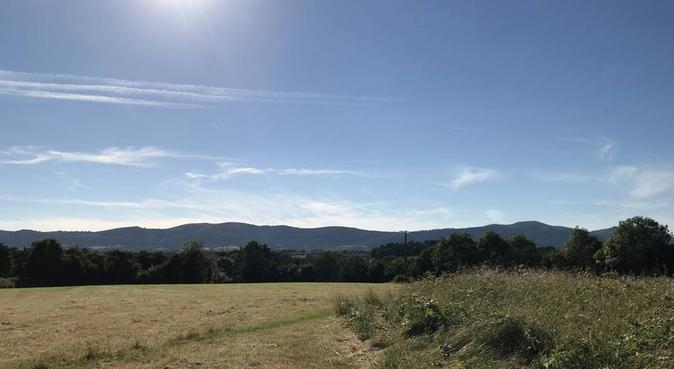 Fun walks around countryside, dog sitter in Upton upon Severn