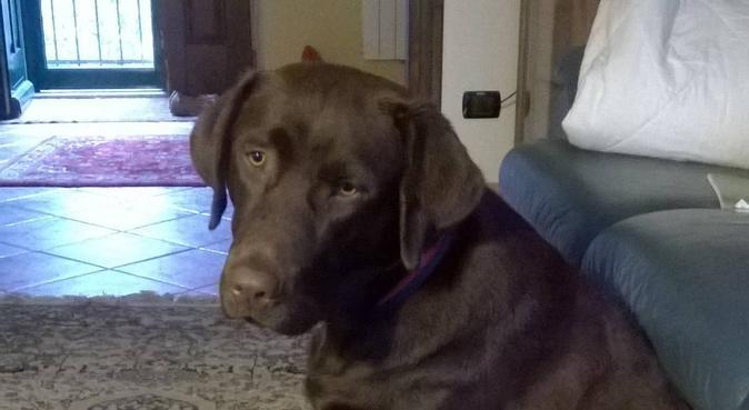 Passeggiate per gli amici a quattro zampe, dog sitter a Campomorone