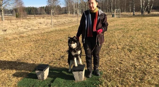 Härliga skogspromenader!, hundvakt nära Södertälje, Sverige