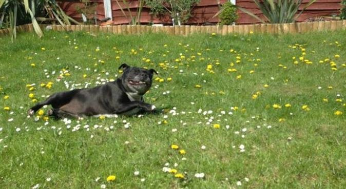 AVAILABLE FOR DOG WALKING, DOG SITTING, dog sitter in Sheffield