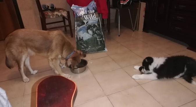 Me encantan los perros., canguro en Alicante