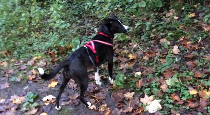 Happydog holidays in South Edinburgh, dog sitter in Edinburgh