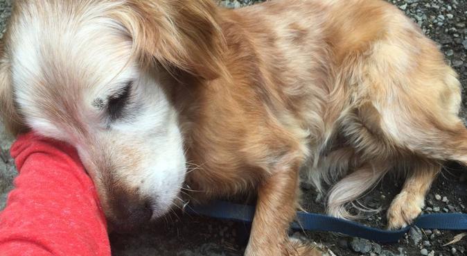 Dog Walker!, dog sitter à Boulogne-billancourt