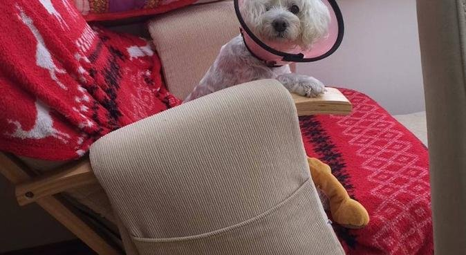 Dog loving home in Cardiff, dog sitter in Cardiff