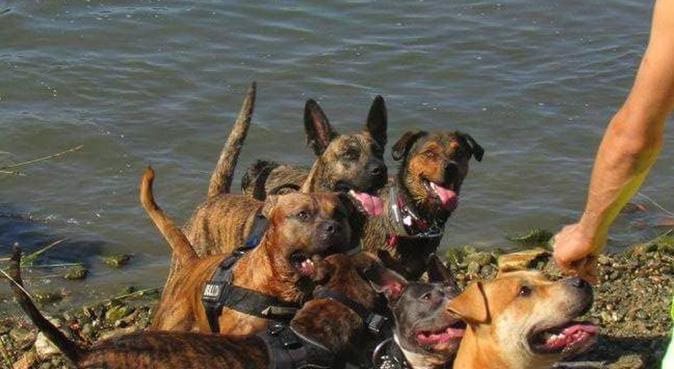 Locky est ses amies, dog sitter à Perpignan