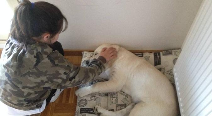 """""""Vitoenea"""" Cuidados y paseos de perros, canguro en Sarriguren"""