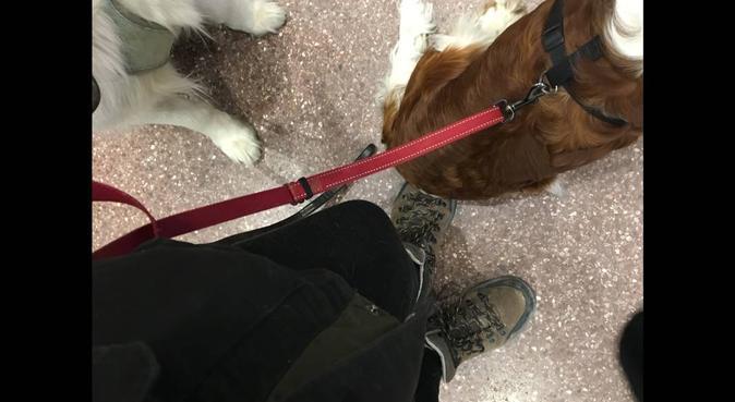 Helgpassning i Barkarby, hundvakt nära Järfälla