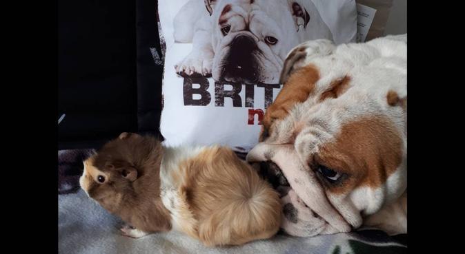 La maison des amis à 4 pattes, dog sitter à Bayonne