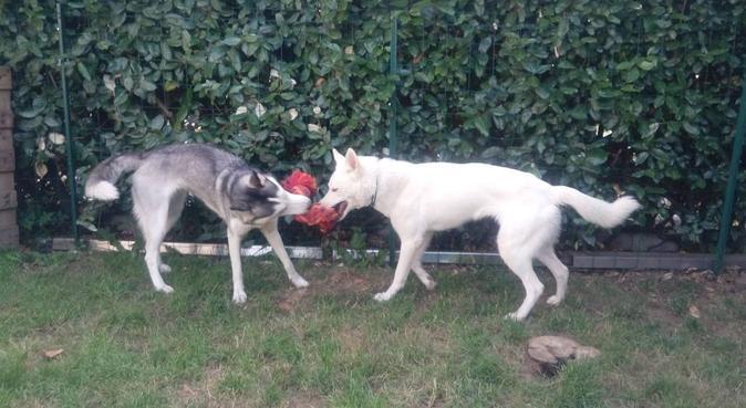 La garde de vos animaux : un vrai plaisir !, dog sitter à Quimper