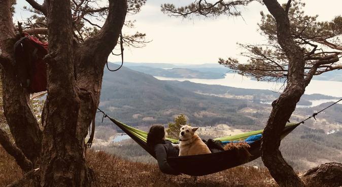 Hundeerfaren student ønsker firbent turkamerat :), hundepassere i Bergen