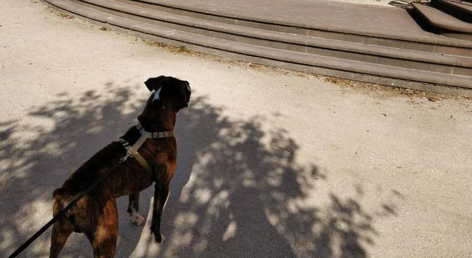 Active and Caring Dog walker in Malmö 🐕💕, hundvakt nära Malmö