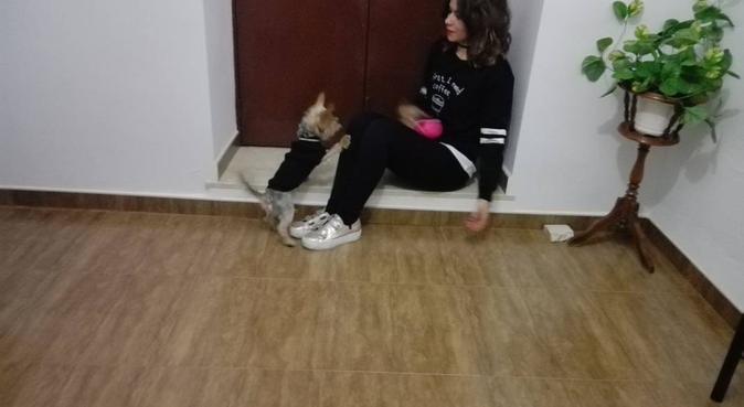Chica simpática y cariñosa pasea perros 8€/h, canguro en Granada