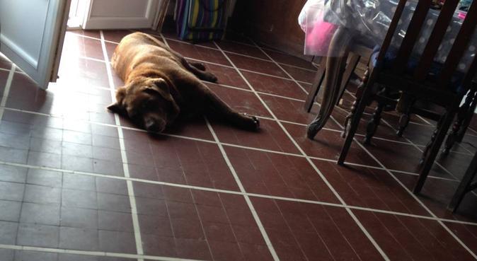 Toujours une croquette dans la poche (Paris), dog sitter à Neuilly-sur-Seine