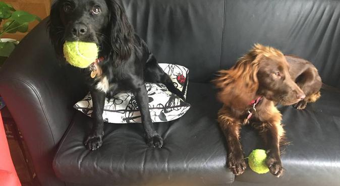 Woodland walks, home made dog treats, dog sitter in Aberdeen