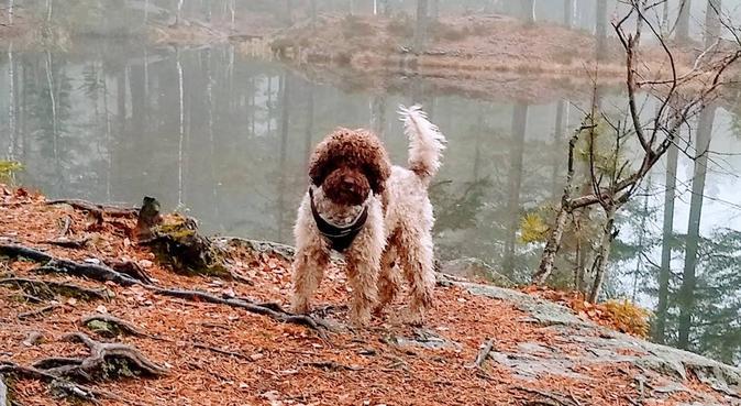 Trim og kos for vofsen din!, hundepassere i OSLO