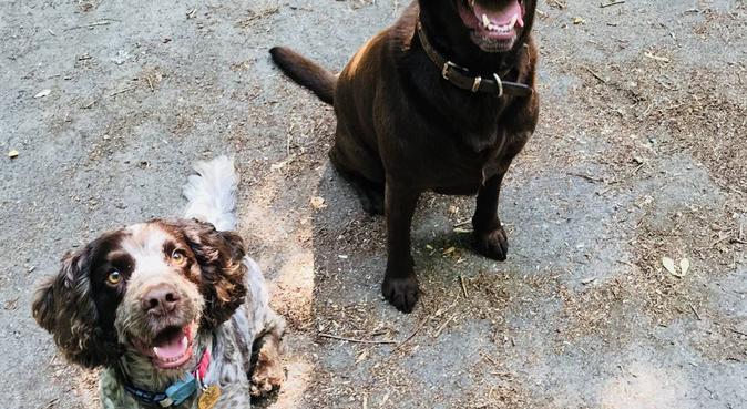 L&L Petcare, dog sitter in Smallfield