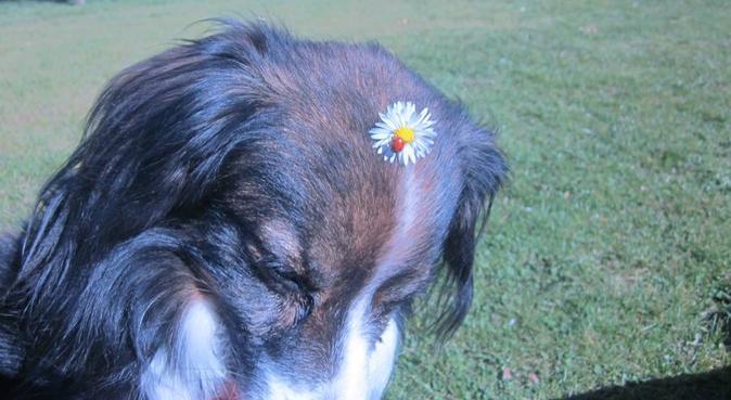Hundesitterin, 20 Jahre, zuverlässig, Hundesitter in Coesfeld