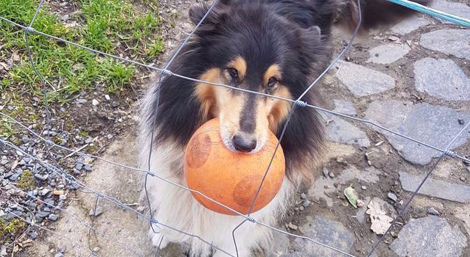 Amie des animaux, garde et s'occupe de tous !, dog sitter à Caen