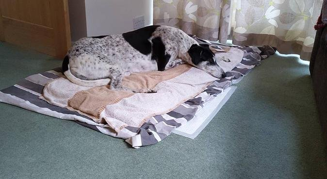 Victoria Pallett Pet Carer, dog sitter in Leicester