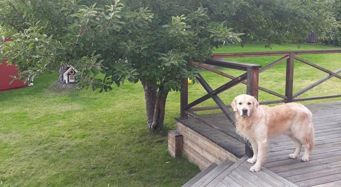 Ideal place for dogs, hundvakt nära Täby