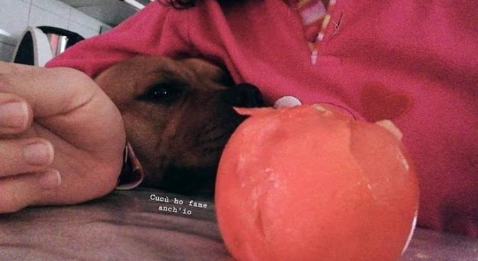 Giovane dogsitter disponibile ad amarli, dog sitter a Napoli, NA, Italia