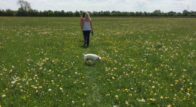 Walking and overnight stay in Brockworth, dog sitter in GLOUCESTER