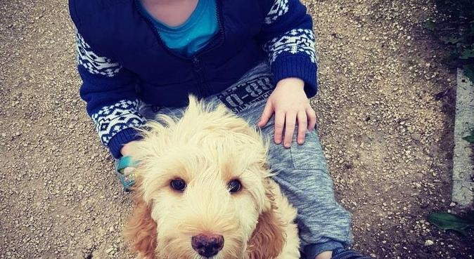 Dog walking and sitting in Lincoln, dog sitter in Lincoln